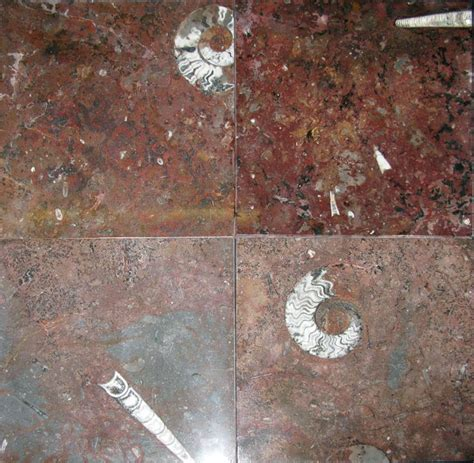 Red Ammonite and Orthoceras Fossil Marble Tiles (12 | Game