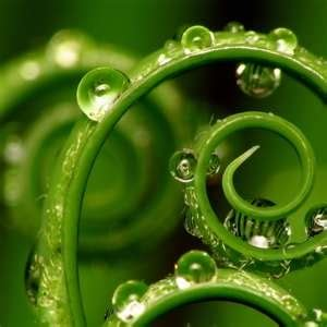 13 best AYA images on Pinterest   Ferns, Leaves and Mother