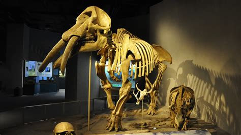 Denver Museum of Nature and Science - Museum App|Antenna Intl