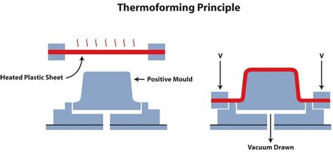 Thermoforming - Extruders of plastic sheet and film