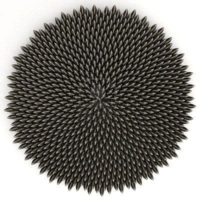 Sunflower seeds arranged according to golden angle by